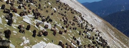 Sumary for diagnosis of Sheepbreeding in Bulgaria